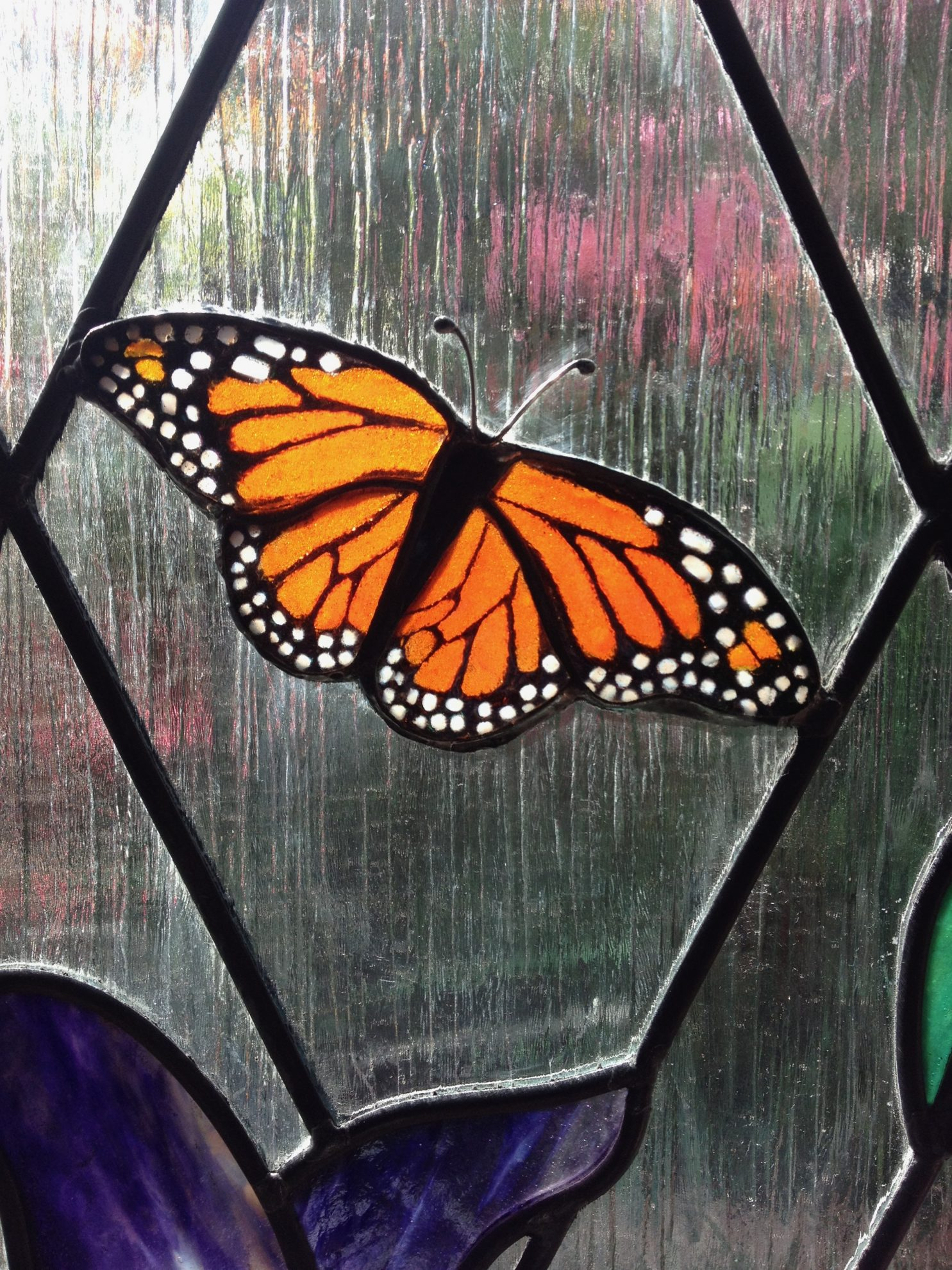 12.monarch